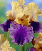Iris Unbuttoned Zippers
