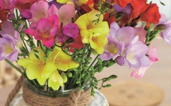 Freesia Fragrant Mix