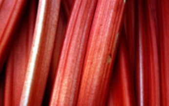 Rhubarb Raspberry Red Mid