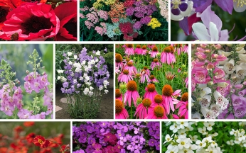 Perennial Mix 30 for £24 - or 10 for £10