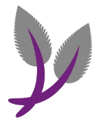 Helleborus (Hellebore) orientalis Double Queen Mix