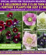 Helleborus (Hellebore) Collection