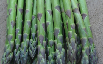 Asparagus 'Guelph Eclipse' (early mid season)