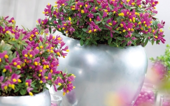 Collection Fragrant Container Displays