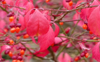 Collection Autumn Ornamental berries