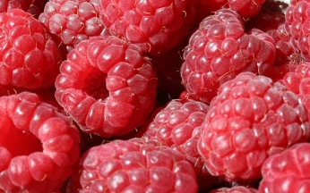 Rubus idaeus Autumn Bliss AGM (raspberry)