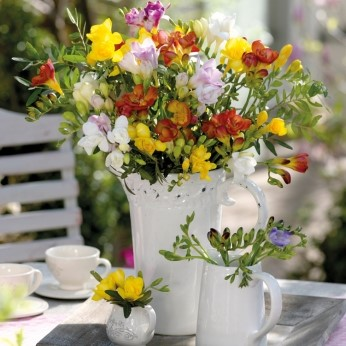 Freesia Fragrant Double Mix