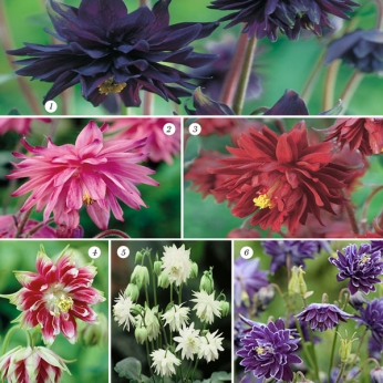 Collection Aquilegia- Double Granny Bonnets
