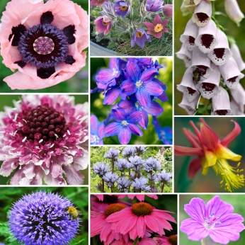 Collection Hardy Perennials